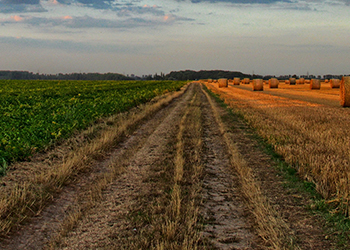 dirt road between dividing two fields