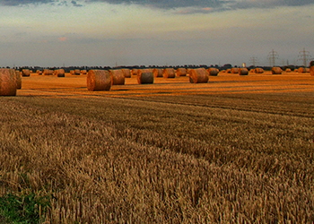 hay field filled with large round bales