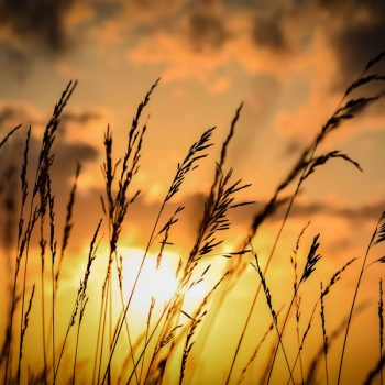 """Golden Beauty""- captures south of Bendena, KS"
